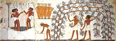 Egyptian vines on trellis and wine press